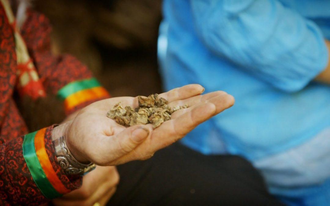 Comentario sobre el Derecho Humano al uso ritual de drogas en México: el caso del peyote