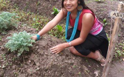 Plantas Ancestrales y su Conocimiento en la Comunidad Kamentsa