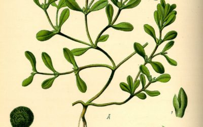 Plantas Sagradas y Jóvenes Indígenas en la Era del Prohibicionismo