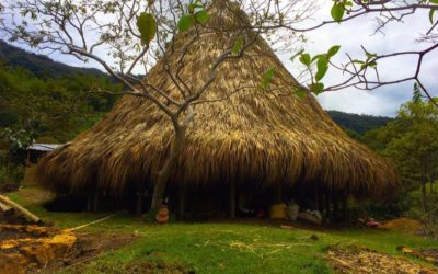 La Coca y el Tabaco en el Proceso de Renacimiento del pueblo Muhysqa de Colombia