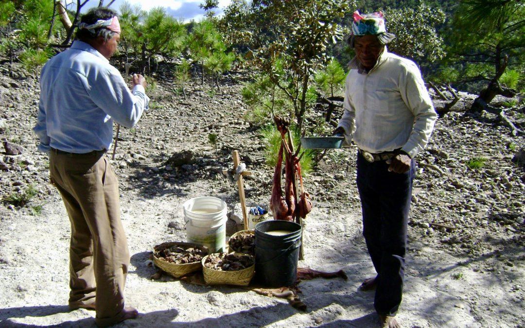 La especialidad del sipáame en la Sierra Tarahumara