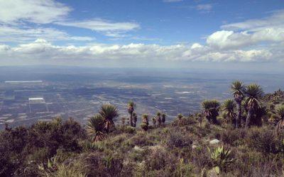 """El Oro Verde y """"Los Nuevos Mestizos"""": Turismo Místico en Wirikuta, San Luis Potosí"""