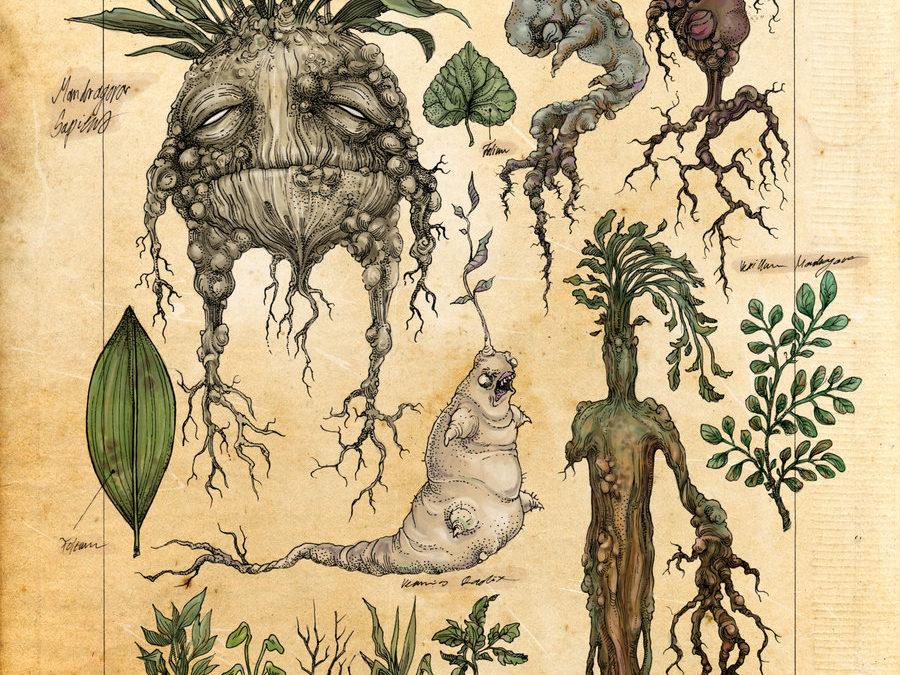Salvador Roquet, Pionero Mexicano en el Uso de Plantas Sagradas en Psicoterapia