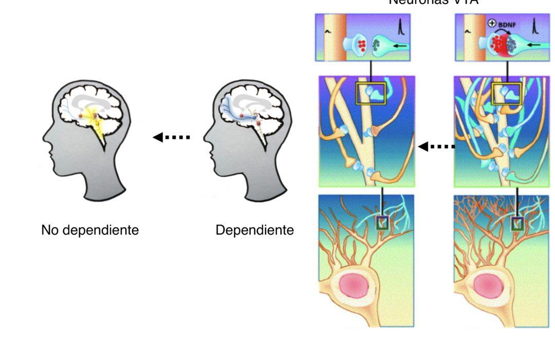 Las Sustancias Enteógenas en el Tratamiento de la Adicción a Sustancias de Abuso