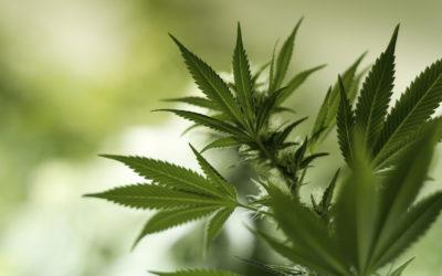 Prácticas y Significados Agrícolas y Medicinales de Terapeutas con Cannabis en Ecuador